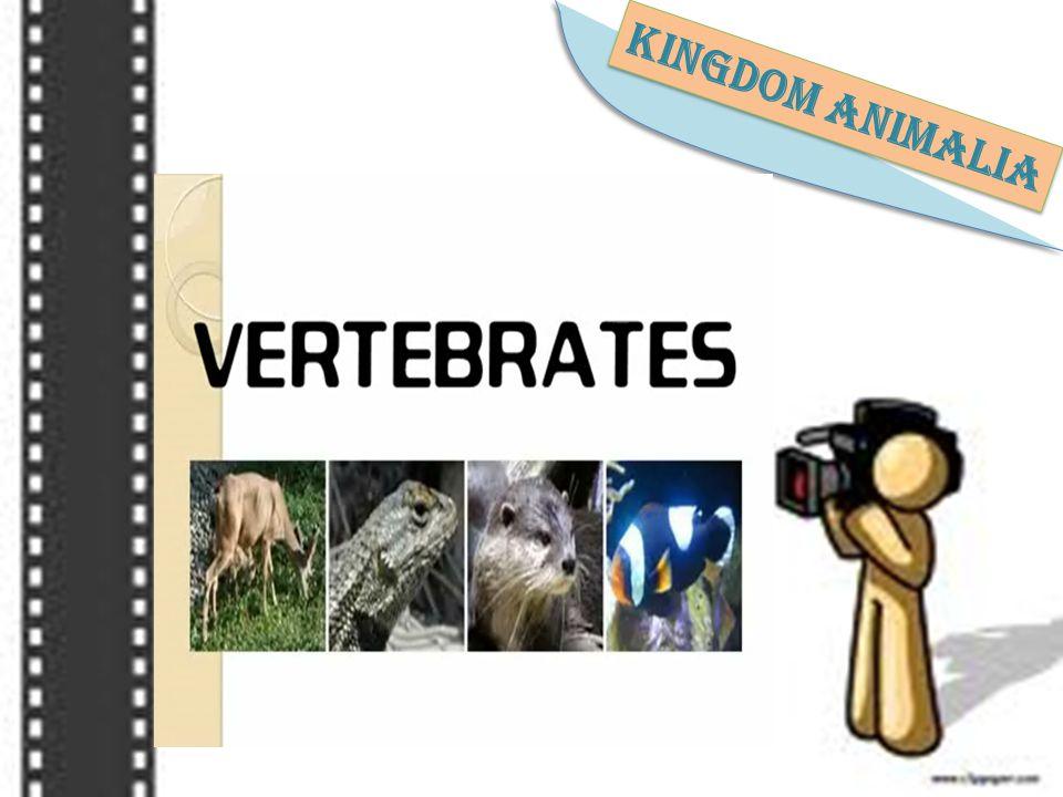 Mau tau macam-macam vertebrata? Kita nonton filmnya yuk!! klik