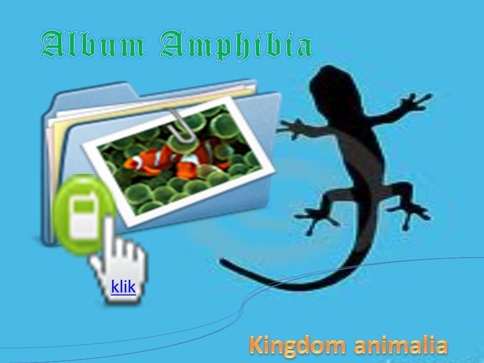 Amphibia INVERTEBRATA DAN VERTEBRATA KINGDOM ANIMALIA Amphibi berarti memiliki dua alam, yaitu di air dan di daratan Amphibia, seperti pada ikan, adal