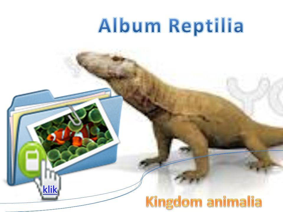 Reptil INVERTEBRATA DAN VERTEBRATA KINGDOM ANIMALIA Reptilia disebut sebagai binatang melata. Melata merupakan cara berjalan dengan menempelkan perut