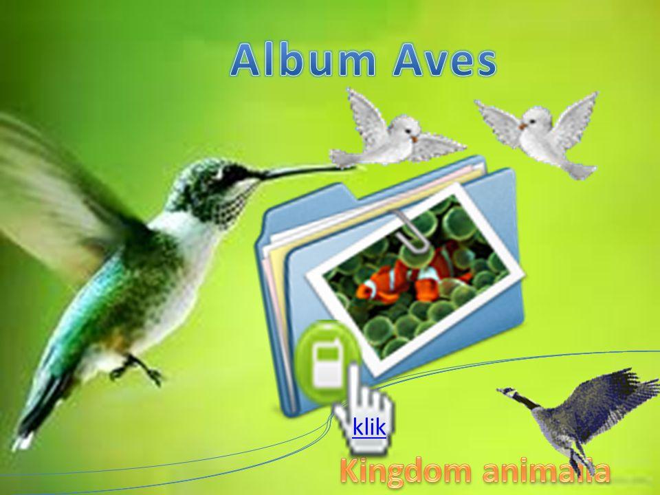Aves INVERTEBRATA DAN VERTEBRATA KINGDOM ANIMALIA 1. tubuh burung ditutupi oleh bulu 2. Bulu dan paruh burung terbuat dari Keratin. 3. Burung memiliki