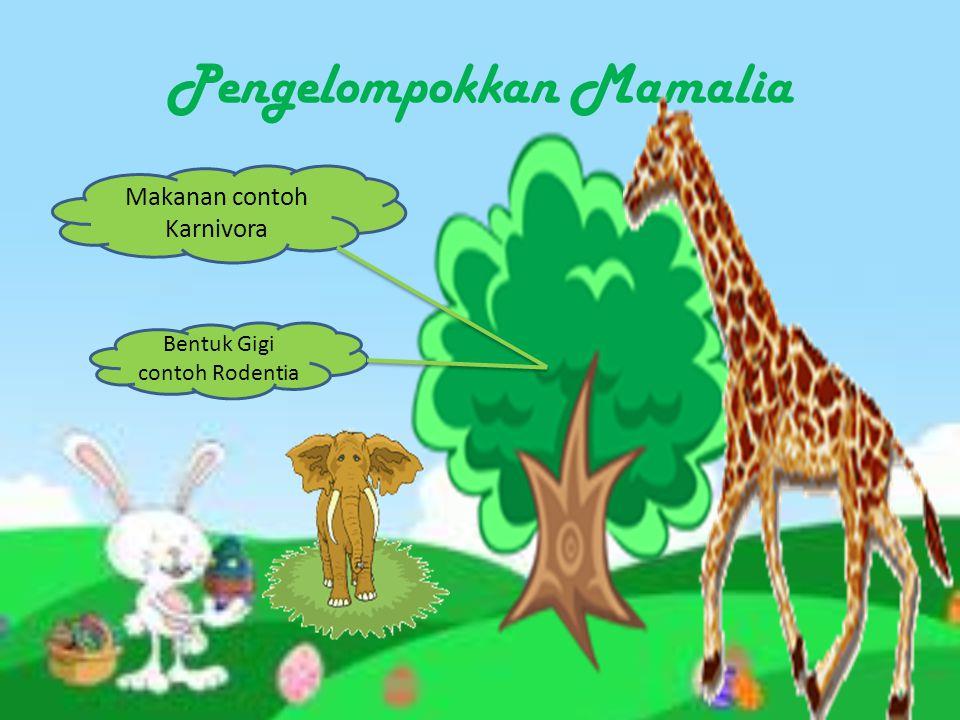 Mamalia INVERTEBRATA DAN VERTEBRATA KINGDOM ANIMALIA a. Memiliki Rambut b. Memilki 3 tulang dibagian telinga c. Memilki kelenjar susu
