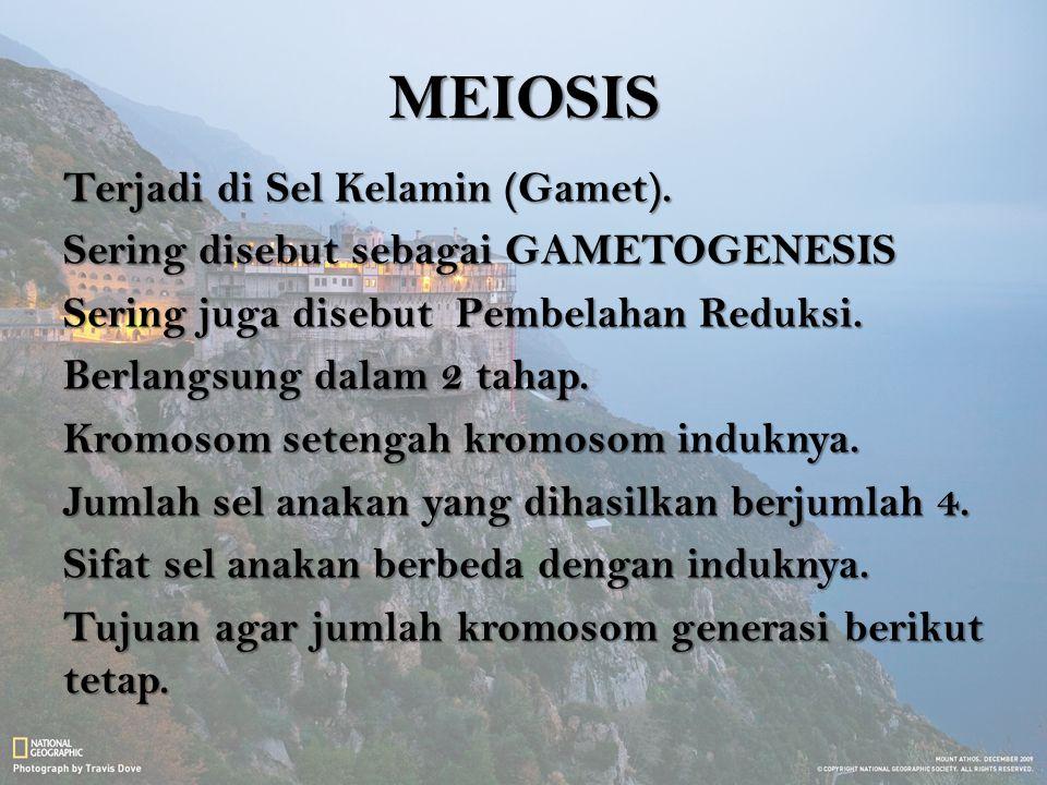 MEIOSIS Terjadi di Sel Kelamin (Gamet). Sering disebut sebagai GAMETOGENESIS Sering juga disebut Pembelahan Reduksi. Berlangsung dalam 2 tahap. Kromos