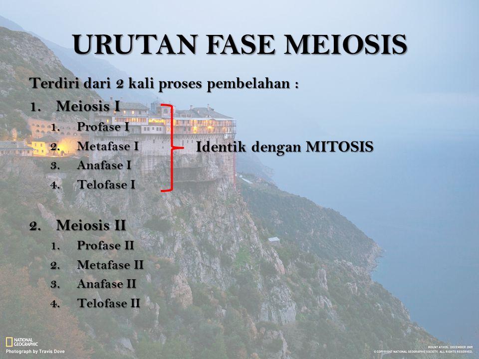 URUTAN FASE MEIOSIS Terdiri dari 2 kali proses pembelahan : 1.Meiosis I 1.Profase I 2.Metafase I 3.Anafase I 4.Telofase I 2.Meiosis II 1.Profase II 2.
