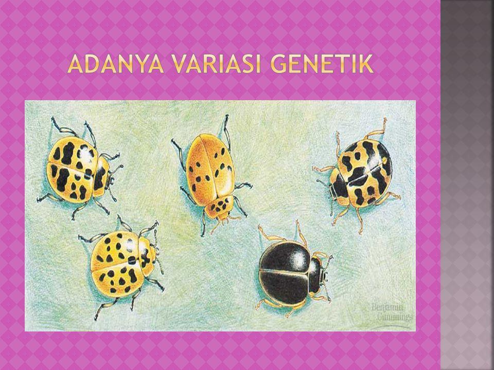  Seleksi alam terjadi karena adanya perbedaan keberhasilan pada reproduksi organisme  Seleksi alam terbentuk dari interaksi antara lingkungan dengan variasi yang dimiliki oleh organisme  Produk seleksi alam adalah adaptasi organisme terhadap lingkungannya