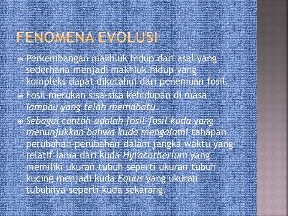  FENOMENA EVOLUSI  TEORI EVOLUSI  TEORI EVOLUSI PRA DARWIN  TEORI EVOLUSI DARWIN  TEORI EVOLUSI LAMARCK VERSUS DARWIN  TEORI EVOLUSI WEISSMANN VERSUS DARWIN dan LAMARCK  PETUNJUK EVOLUSI
