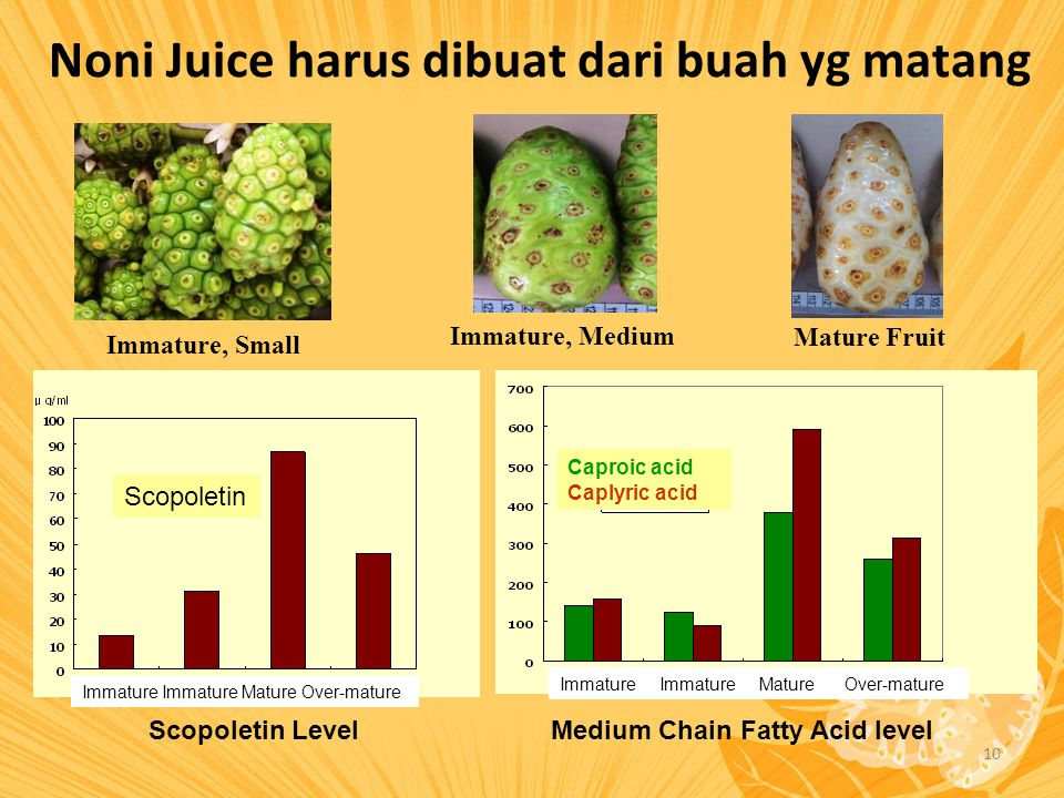 10 Noni Juice harus dibuat dari buah yg matang Immature, Small Immature, Medium Mature Fruit Scopoletin LevelMedium Chain Fatty Acid level Caproic aci