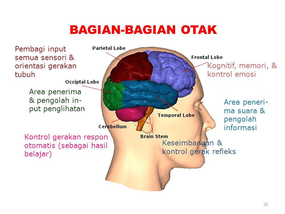 20 BAGIAN-BAGIAN OTAK Kognitif, memori, & kontrol emosi Area peneri- ma suara & pengolah informasi Keseimbangan & kontrol gerak refleks Pembagi input