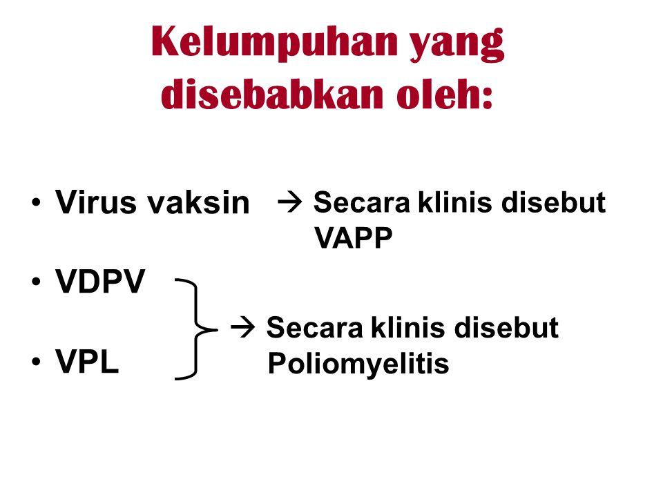 Kelumpuhan yang disebabkan oleh: •Virus vaksin •VDPV •VPL  Secara klinis disebut Poliomyelitis  Secara klinis disebut VAPP