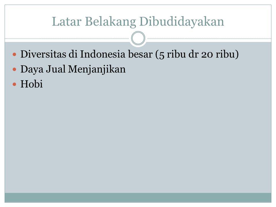 Latar Belakang Dibudidayakan  Diversitas di Indonesia besar (5 ribu dr 20 ribu)  Daya Jual Menjanjikan  Hobi