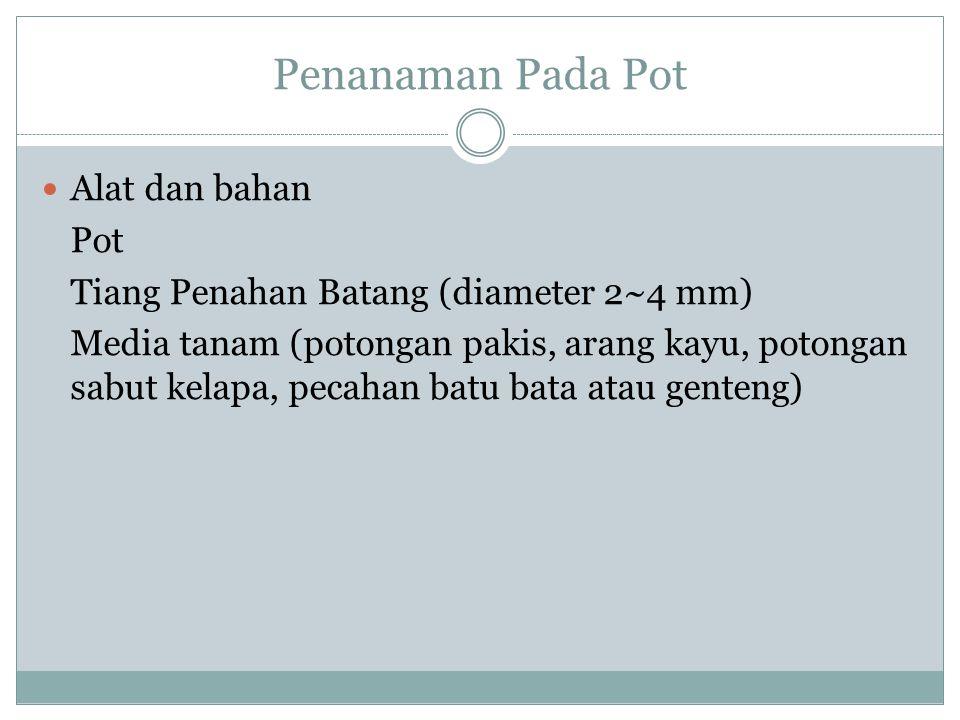 Penanaman Pada Pot  Alat dan bahan Pot Tiang Penahan Batang (diameter 2~4 mm) Media tanam (potongan pakis, arang kayu, potongan sabut kelapa, pecahan batu bata atau genteng)
