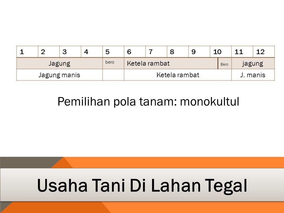 123456789101112 Jagung bero Ketela rambat Bero jagung Jagung manisKetela rambatJ.