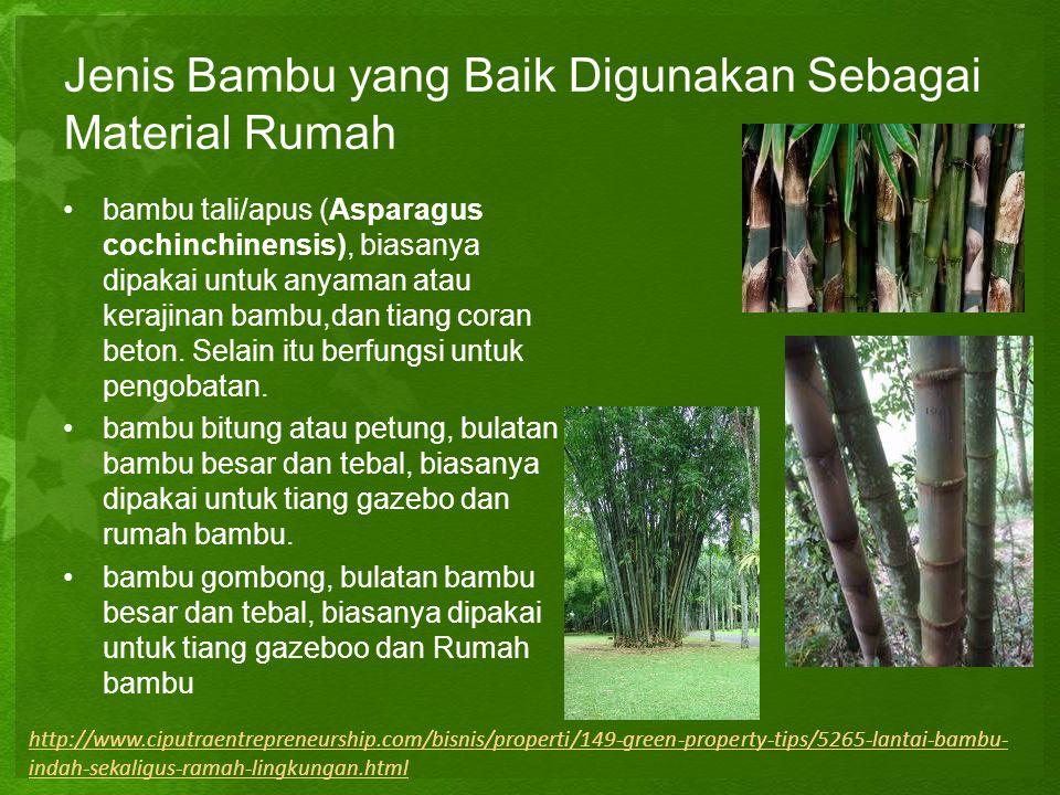 Jenis Bambu yang Baik Digunakan Sebagai Material Rumah •b•bambu tali/apus (Asparagus cochinchinensis), biasanya dipakai untuk anyaman atau kerajinan b