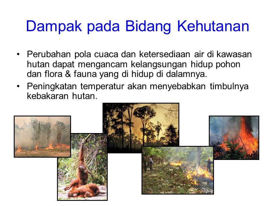 Dampak pada Bidang Kehutanan •Perubahan pola cuaca dan ketersediaan air di kawasan hutan dapat mengancam kelangsungan hidup pohon dan flora & fauna ya
