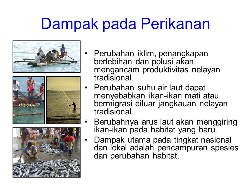 Dampak pada Perikanan •Perubahan iklim, penangkapan berlebihan dan polusi akan mengancam produktivitas nelayan tradisional. •Perubahan suhu air laut d