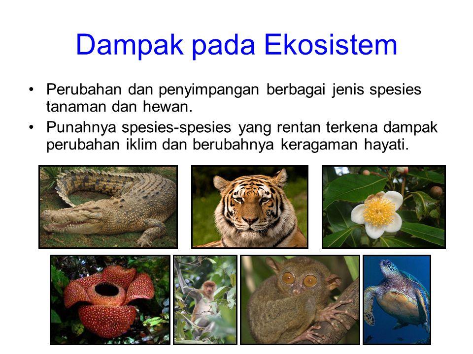 Dampak pada Ekosistem •Perubahan dan penyimpangan berbagai jenis spesies tanaman dan hewan. •Punahnya spesies-spesies yang rentan terkena dampak perub