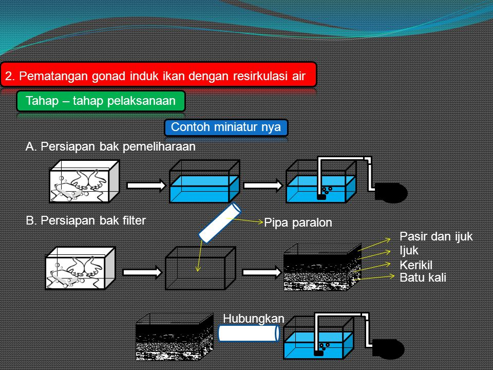 2.Pematangan gonad induk ikan dengan resirkulasi air Tahap – tahap pelaksanaan A.