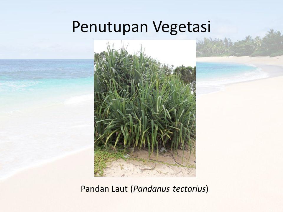 Penutupan Vegetasi Pandan Laut (Pandanus tectorius)