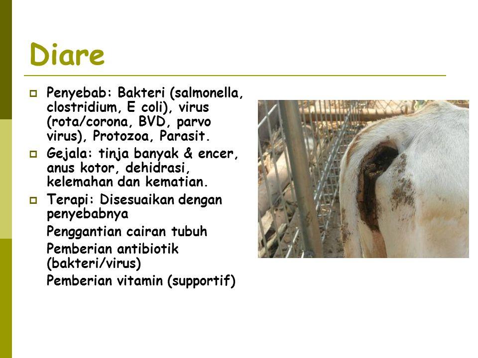 Diare  Penyebab: Bakteri (salmonella, clostridium, E coli), virus (rota/corona, BVD, parvo virus), Protozoa, Parasit.  Gejala: tinja banyak & encer,