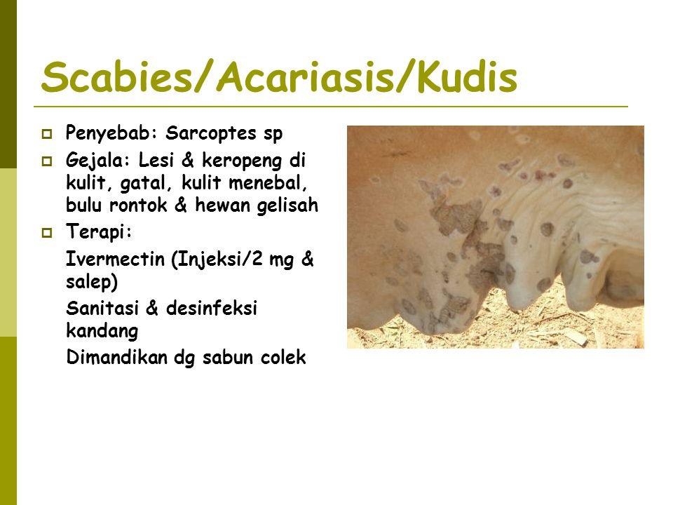 Scabies/Acariasis/Kudis  Penyebab: Sarcoptes sp  Gejala: Lesi & keropeng di kulit, gatal, kulit menebal, bulu rontok & hewan gelisah  Terapi: Iverm
