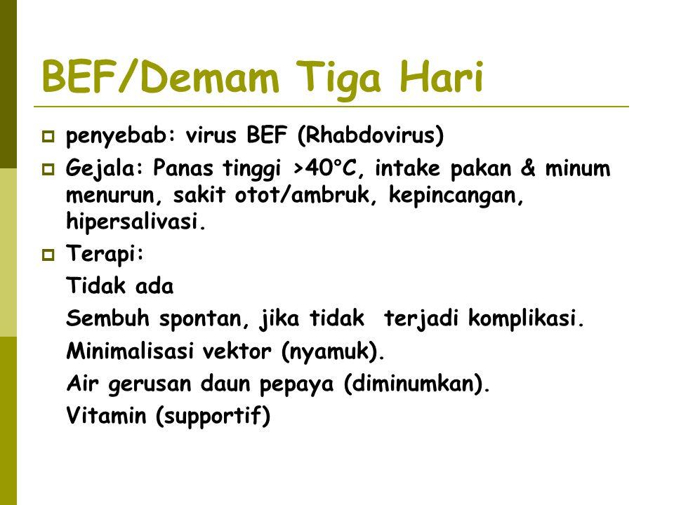 BEF/Demam Tiga Hari  penyebab: virus BEF (Rhabdovirus)  Gejala: Panas tinggi >40°C, intake pakan & minum menurun, sakit otot/ambruk, kepincangan, hi