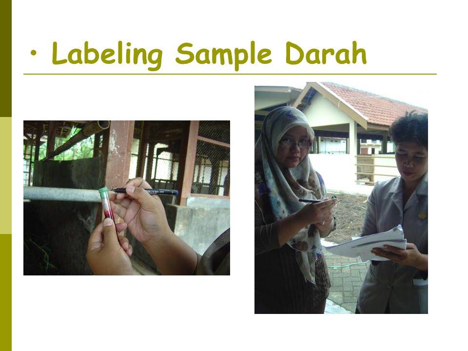• Labeling Sample Darah