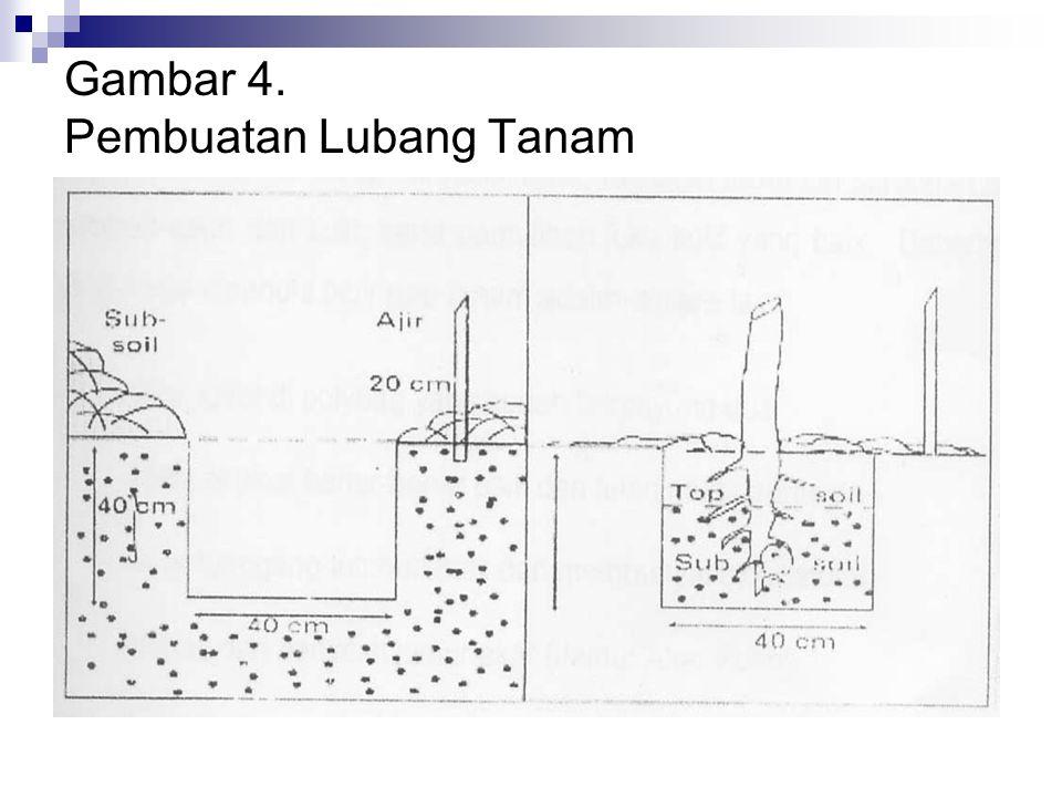 Gambar 4. Pembuatan Lubang Tanam