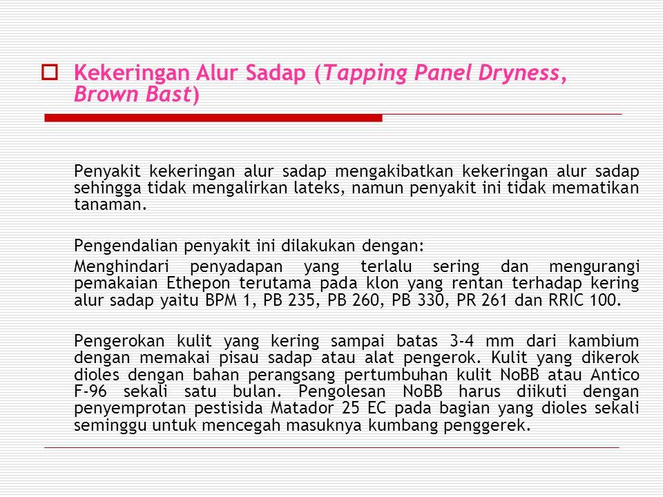  Kekeringan Alur Sadap (Tapping Panel Dryness, Brown Bast) Penyakit kekeringan alur sadap mengakibatkan kekeringan alur sadap sehingga tidak mengalirkan lateks, namun penyakit ini tidak mematikan tanaman.