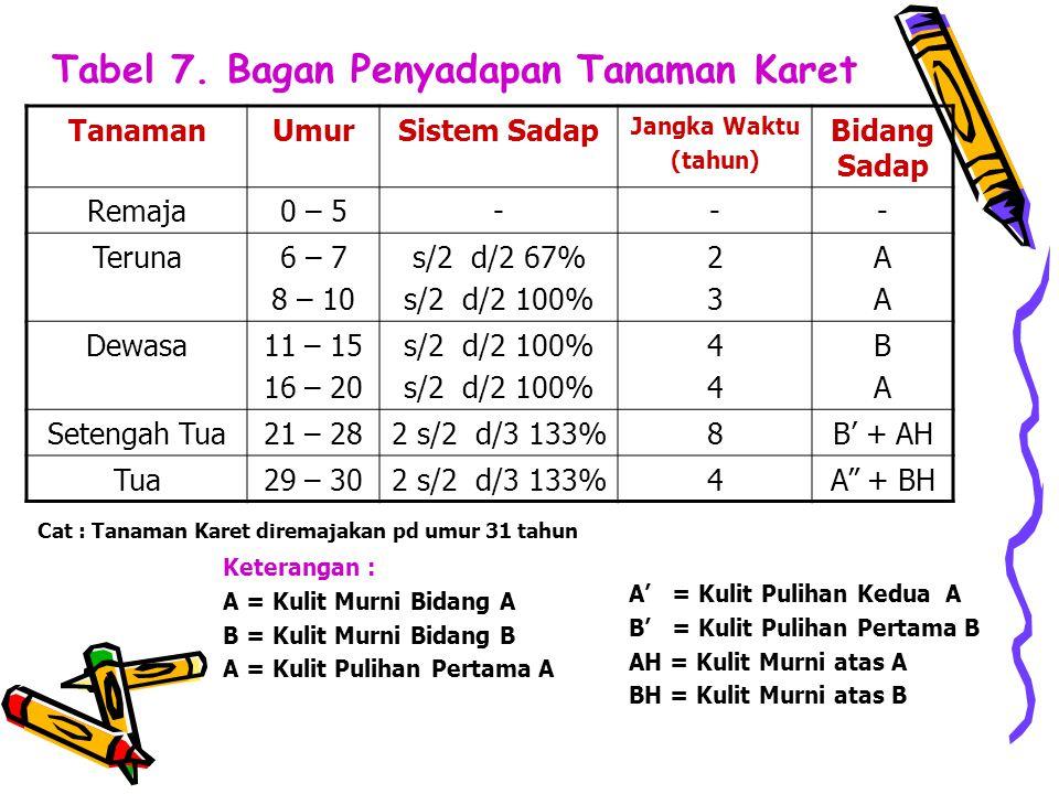 Tabel 7. Bagan Penyadapan Tanaman Karet TanamanUmurSistem Sadap Jangka Waktu (tahun) Bidang Sadap Remaja0 – 5--- Teruna6 – 7 8 – 10 s/2 d/2 67% s/2 d/