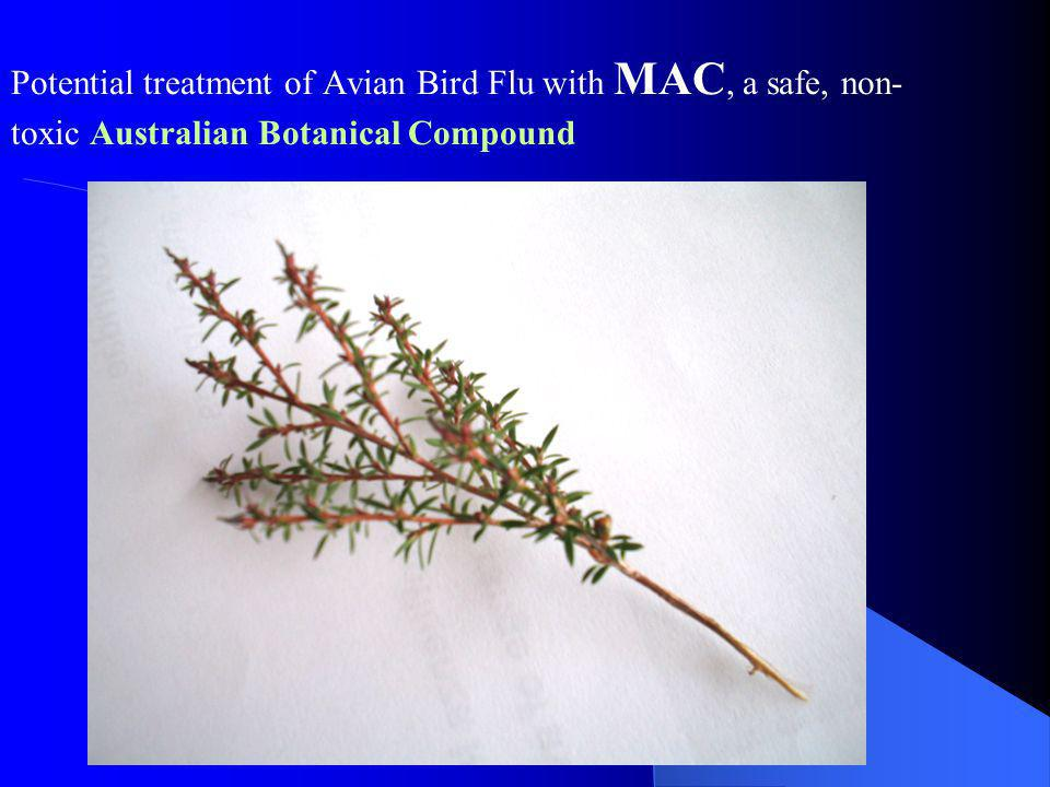 Potential treatment of Avian Bird Flu with MAC, a safe, non- toxic Australian Botanical Compound