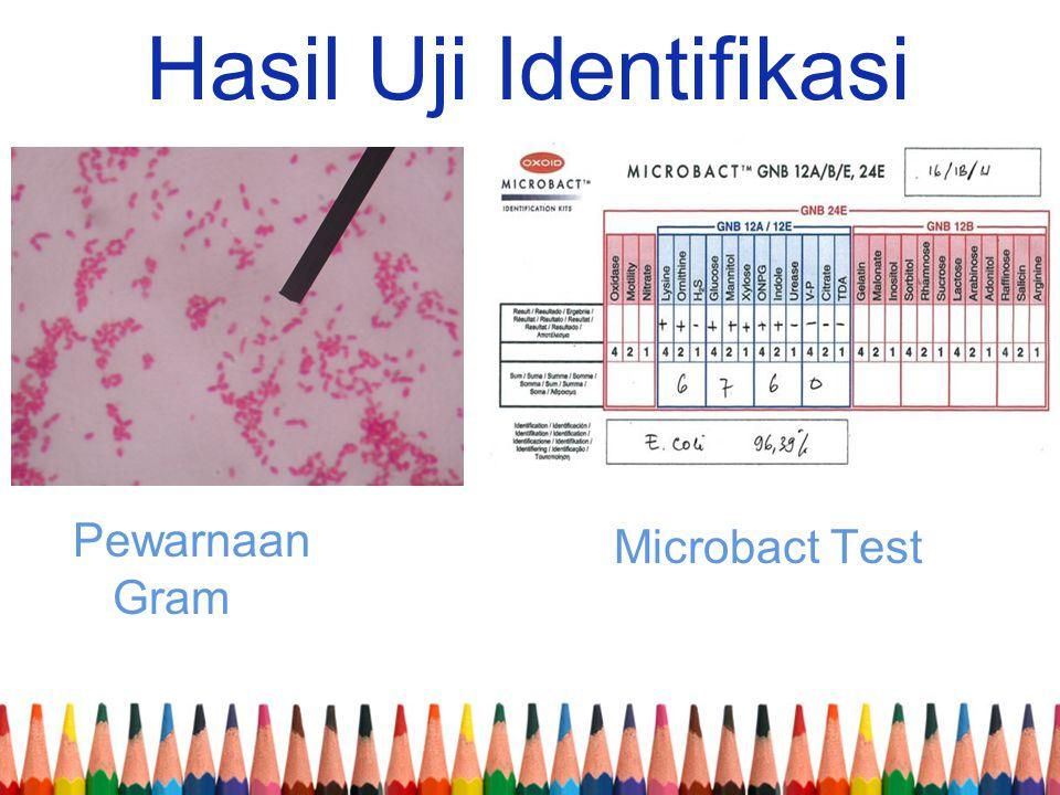 Hasil Uji Identifikasi Pewarnaan Gram Microbact Test