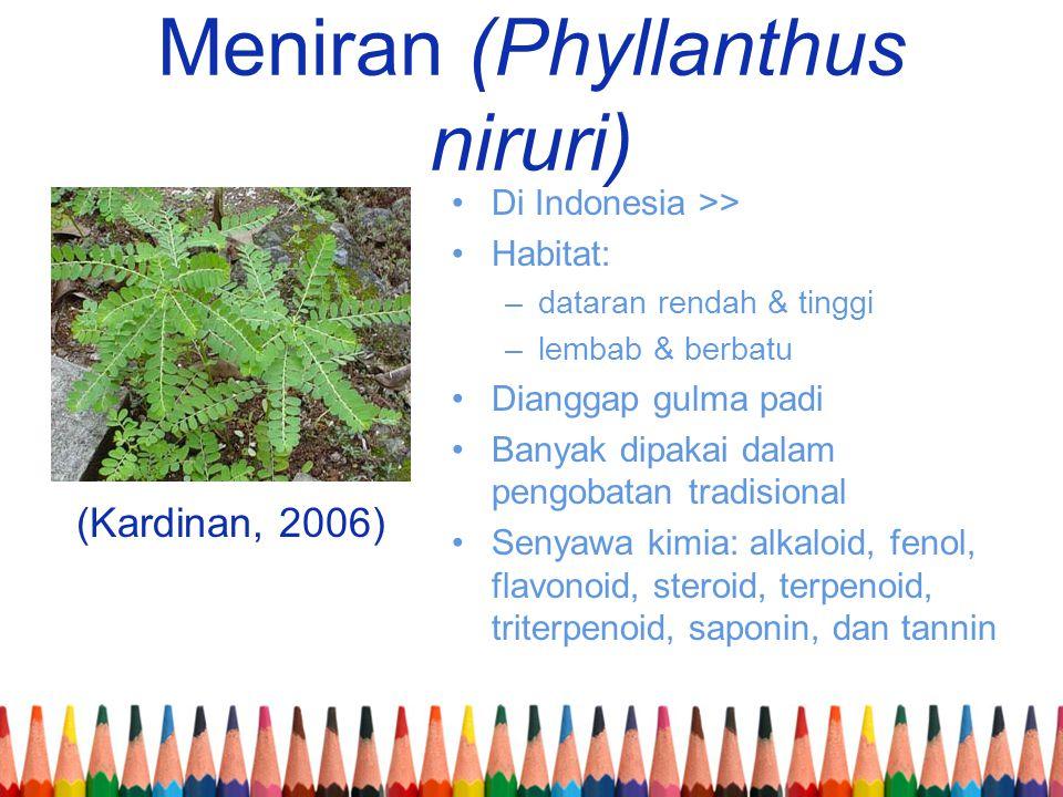 Meniran (Phyllanthus niruri) (Kardinan, 2006) •Di Indonesia >> •Habitat: –dataran rendah & tinggi –lembab & berbatu •Dianggap gulma padi •Banyak dipak