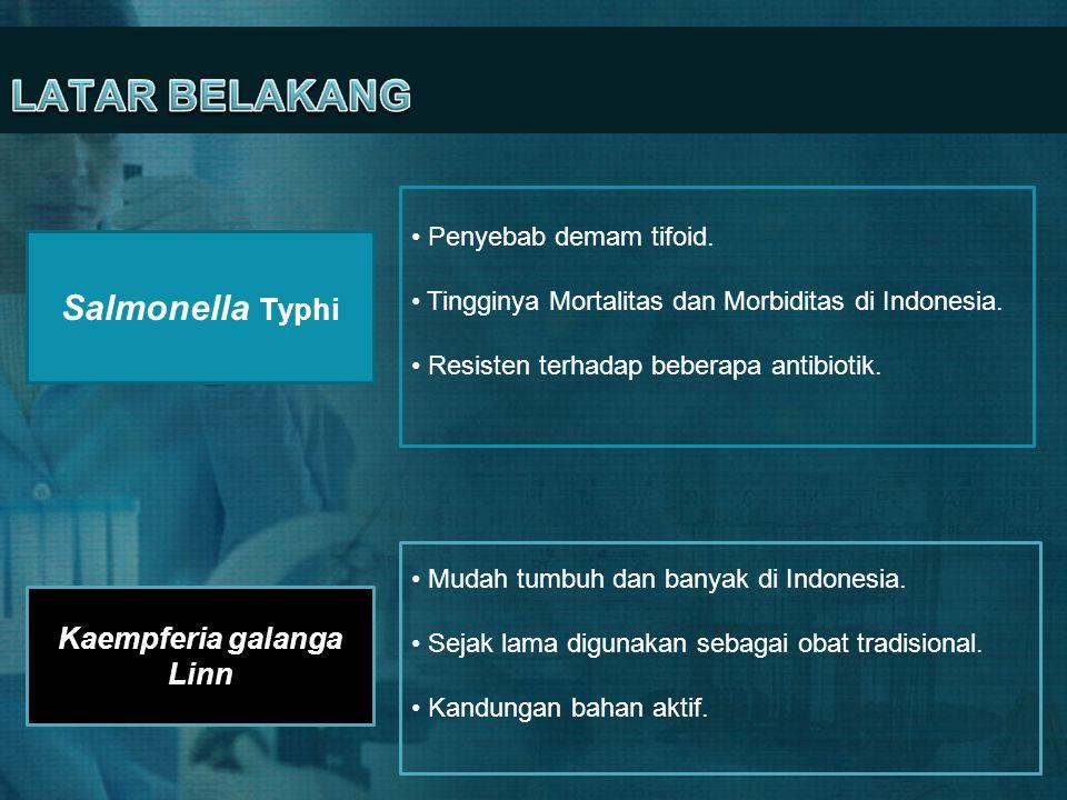 Salmonella Typhi • Penyebab demam tifoid. • Tingginya Mortalitas dan Morbiditas di Indonesia. • Resisten terhadap beberapa antibiotik. Kaempferia gala