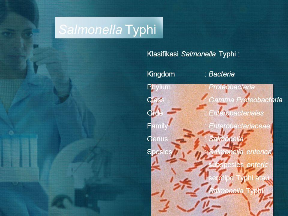 Salmonella Typhi Klasifikasi Salmonella Typhi : Kingdom: Bacteria Phylum: Proteobacteria Class: Gamma Proteobacteria Orde: Enterobacteriales Family: E