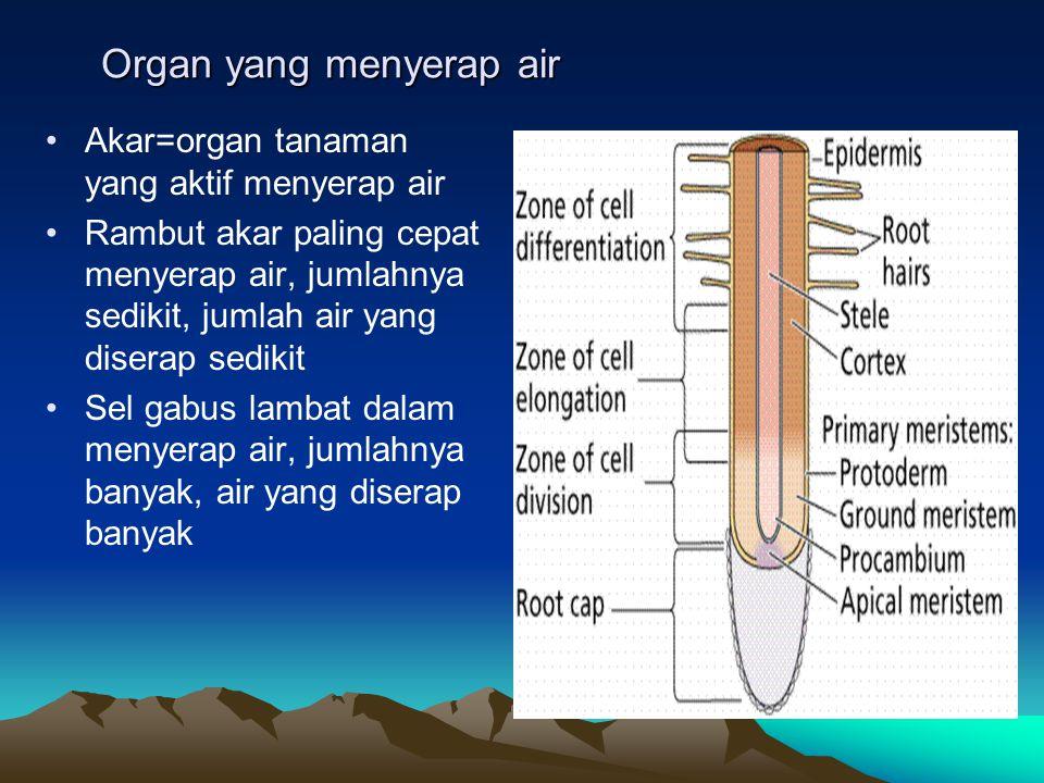Mekanisme penyerapan air Ada 2 yaitu penyerapan aktif dan pasif: 1.Aktif: aktif osmotik dan aktif non osmotik 2.Pasif: tarikan transpirasi (penggeraknya transpirasi)