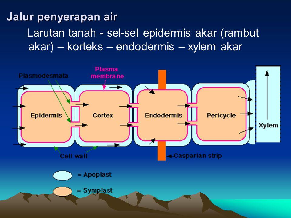 Faktor yang mempengaruhi penyerapan •Faktor lingkungan: ketersediaan air, aerasi, konsentrasi larutan tanah, suhu •Faktor tanaman: laju transpirasi tanaman, sistem perakaran, metabolisme