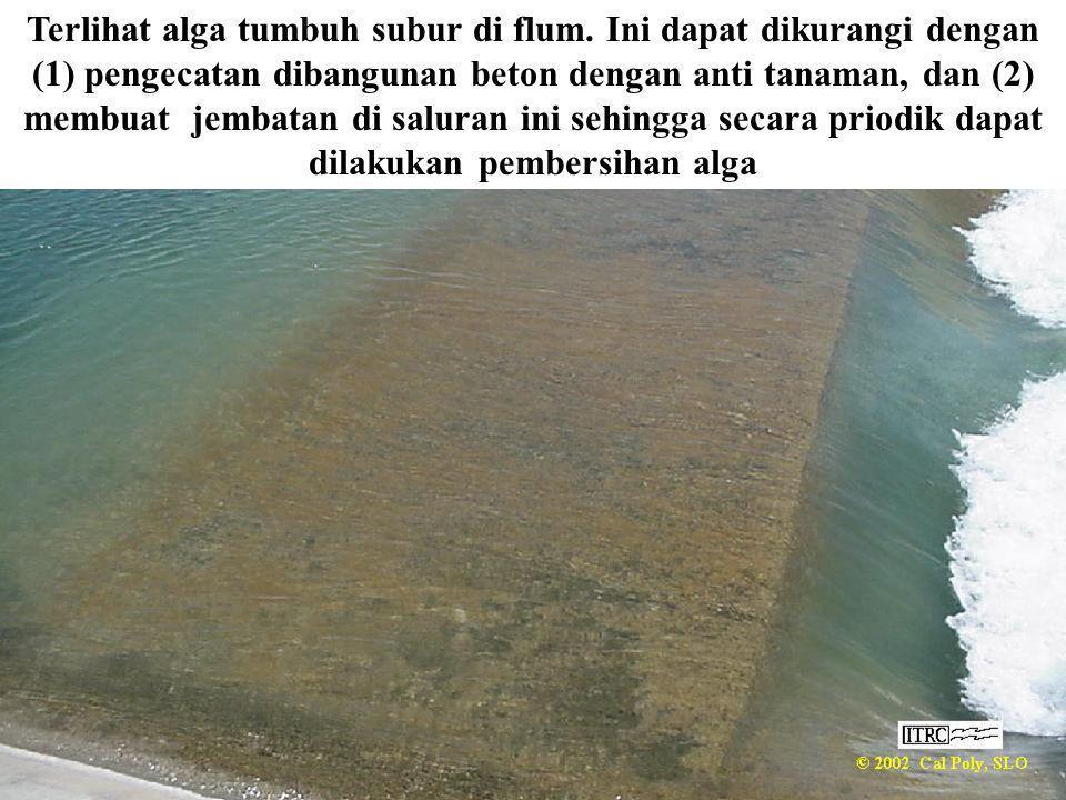 Terlihat alga tumbuh subur di flum. Ini dapat dikurangi dengan (1) pengecatan dibangunan beton dengan anti tanaman, dan (2) membuat jembatan di salura