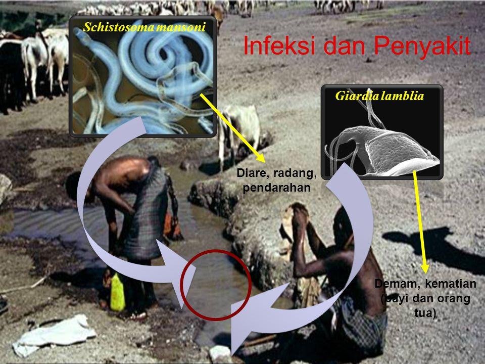 Infeksi dan Penyakit Giardia lamblia Schistosoma mansoni Diare, radang, pendarahan Demam, kematian (bayi dan orang tua)