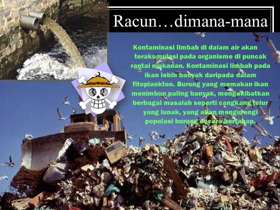Racun…dimana-mana Kontaminasi limbah di dalam air akan terakumulasi pada organisme di puncak rantai makanan.