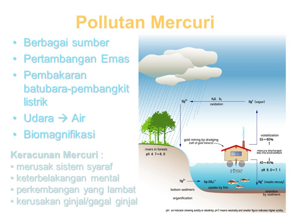 •Berbagai sumber •Pertambangan Emas •Pembakaran batubara-pembangkit listrik •Udara  Air •Biomagnifikasi Pollutan Mercuri Keracunan Mercuri : • merusak sistem syaraf • keterbelakangan mental • perkembangan yang lambat • kerusakan ginjal/gagal ginjal