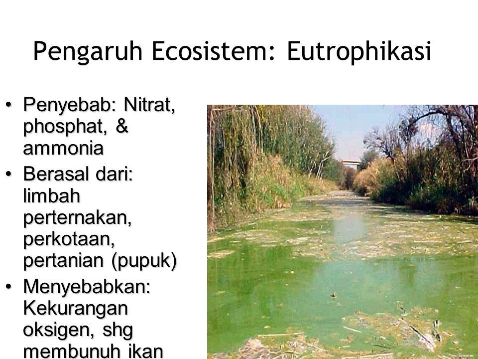Pengaruh Ecosistem: Eutrophikasi •Penyebab: Nitrat, phosphat, & ammonia •Berasal dari: limbah perternakan, perkotaan, pertanian (pupuk) •Menyebabkan: Kekurangan oksigen, shg membunuh ikan