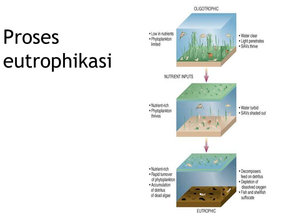 Proses eutrophikasi