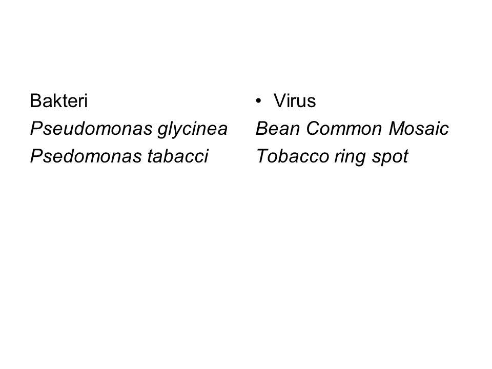 Bakteri Pseudomonas glycinea Psedomonas tabacci •Virus Bean Common Mosaic Tobacco ring spot