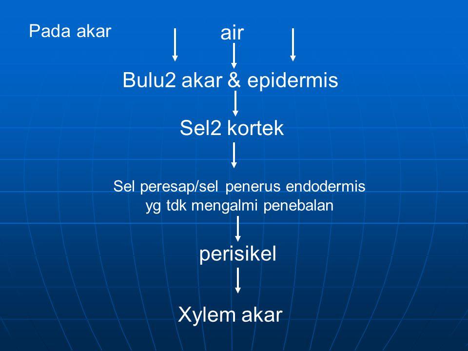 Pada akar air Bulu2 akar & epidermis Sel2 kortek Sel peresap/sel penerus endodermis yg tdk mengalmi penebalan perisikel Xylem akar
