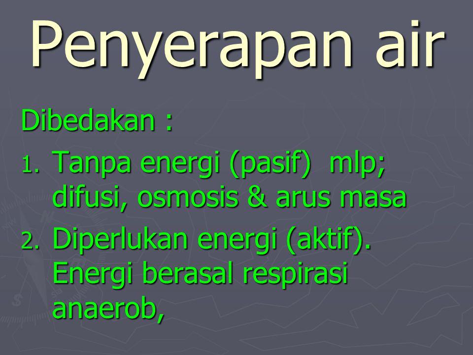 Penyerapan air Dibedakan : 1. Tanpa energi (pasif) mlp; difusi, osmosis & arus masa 2. Diperlukan energi (aktif). Energi berasal respirasi anaerob,