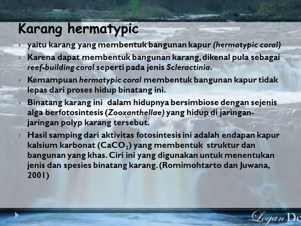 Berdasarkan kemampuan memproduksi kapur maka karang dibedakan menjadi 2 yaitu: 1. Karang hermatypic 2. Karang ahermatypic