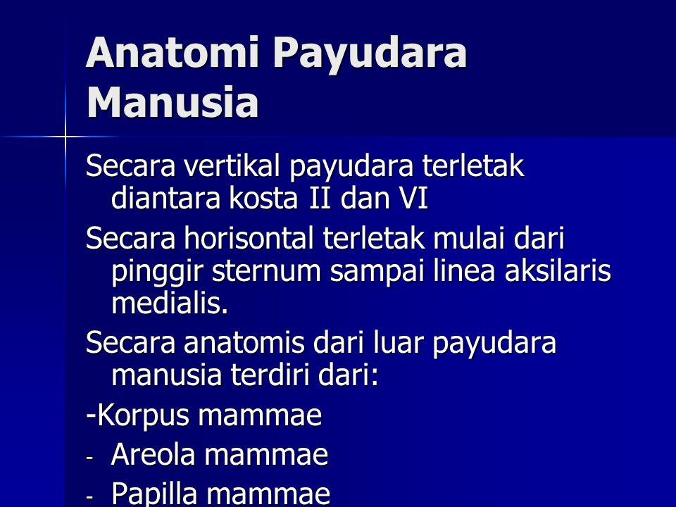 Anatomi Payudara Manusia Secara vertikal payudara terletak diantara kosta II dan VI Secara horisontal terletak mulai dari pinggir sternum sampai linea