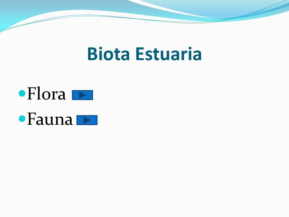  Fauna khas air payau atau estuaria terdiri dari species yang terdapat pada kisaran salinitas antara 5‰ - 30‰, tetapi tidak ditemukan di air tawar maupun yang sepenuhnya air laut, contohnya antara lain adalah tiram ( Crassostrea ostrea ), siput kecil ( Hydrobia ), berbagai tiram dan udang.