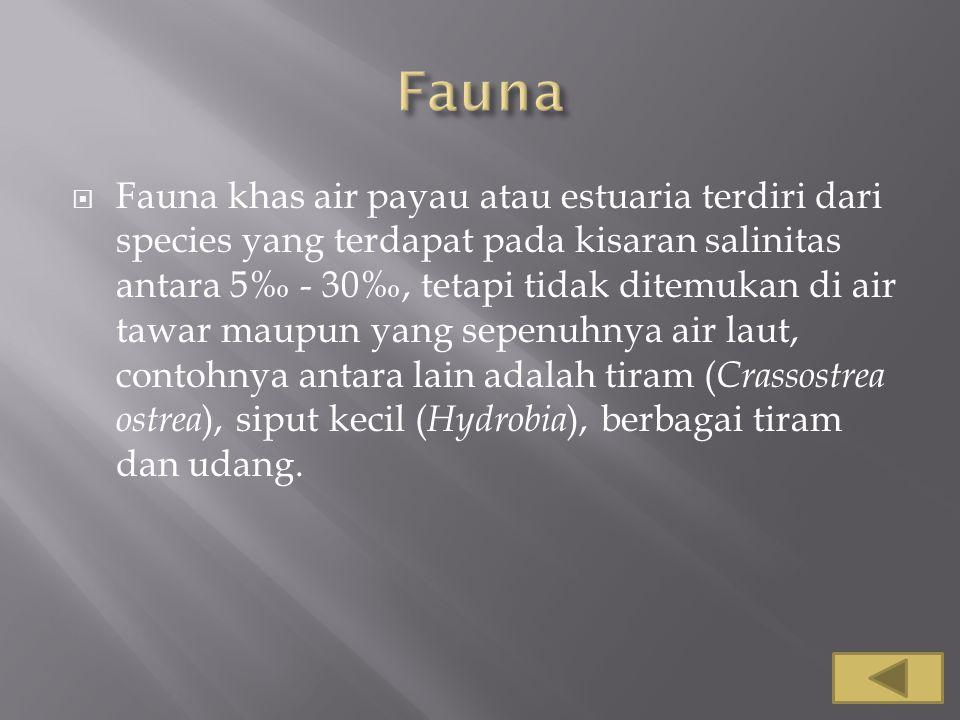  Fauna khas air payau atau estuaria terdiri dari species yang terdapat pada kisaran salinitas antara 5‰ - 30‰, tetapi tidak ditemukan di air tawar ma