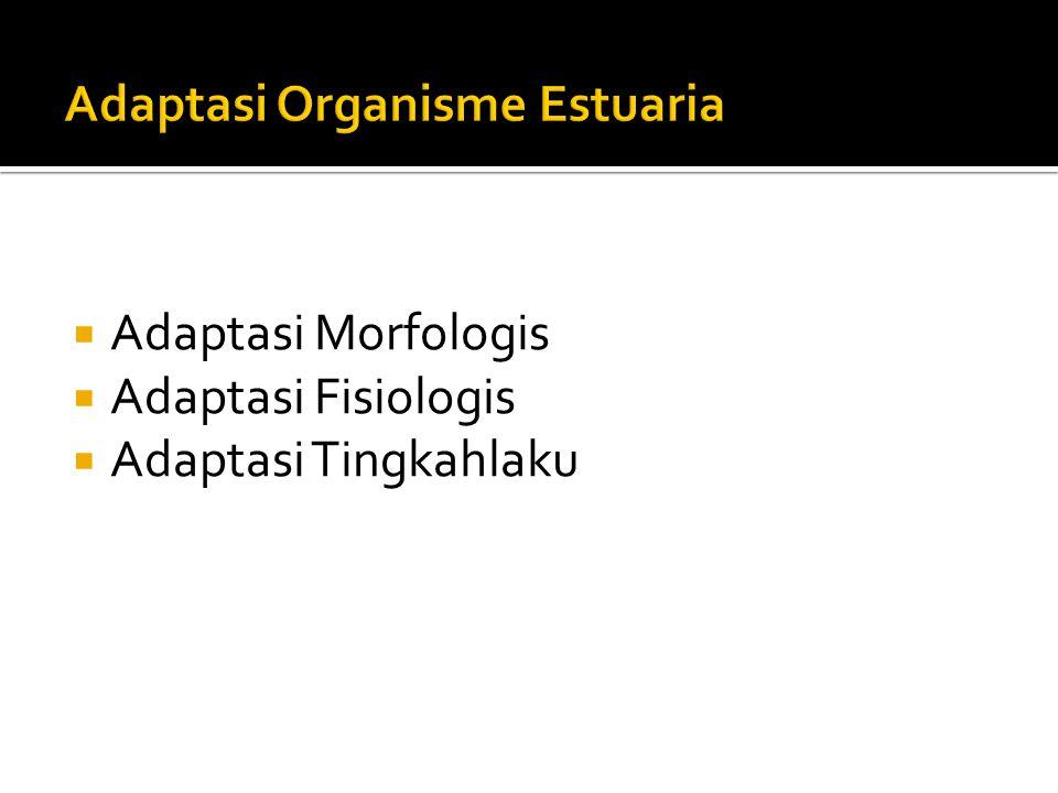  Adaptasi Morfologis  Adaptasi Fisiologis  Adaptasi Tingkahlaku
