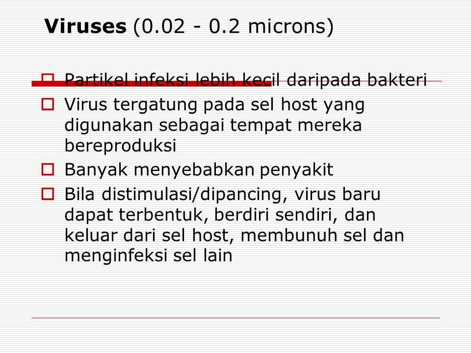 Protozoa (4 - 20 microns)  Organisma ber-sel satu  Lebih besar ukurannya dari bakteri dan virus  Mampu membentuk kista yang resisten/kebal terhadap
